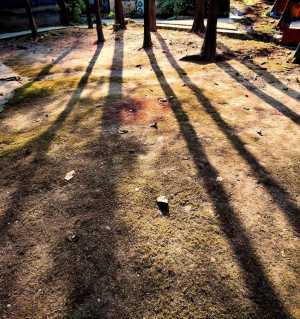 冬日拉长的影子(今天下午手机拍摄)