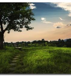 湿地公园晚景