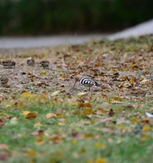 外出拍到少见的鸟