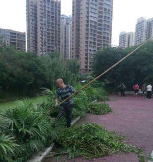 星港湾几位业主自发清理罗汉堰