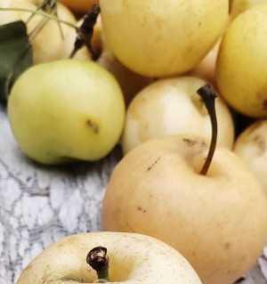 出售梨子,批发一块一斤,到屋采摘