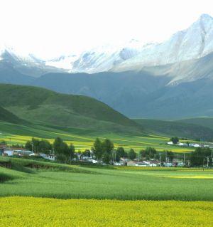 门源   岗什卡雪峰下的田园