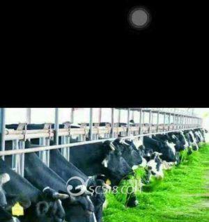 雪宝牛奶每天送