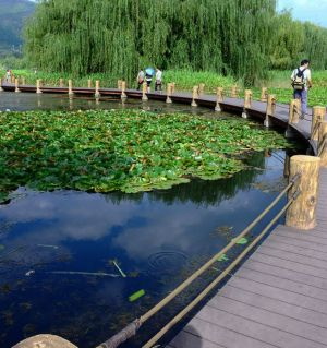 草的魅力一拍于西昌邛海